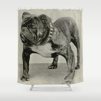 english bulldog Shower Curtains featuring Vintage English Bulldog Photograph by BravuraMedia