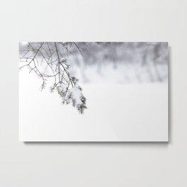 Snowy Spruce Needles 4 Metal Print