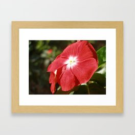 Close Up Of A Red Busy Lizzie Flower Framed Art Print