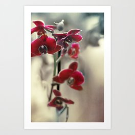 The mystery of orchid(11) Art Print