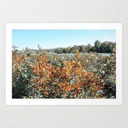 Autumn Scenes V Art Print