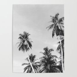 Palms Trees on the San Blas Islands, Panama - Black & White Poster