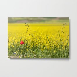 Red poppy in a yellow field Metal Print