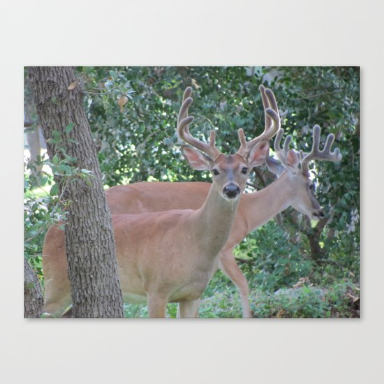Up Close and Personal Canvas Print