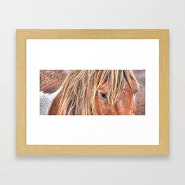 Shaggy Island Pony Framed Art Print