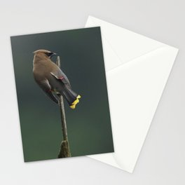 Cedar Waxwing Stationery Cards