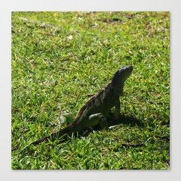 Green Iguana Canvas Print