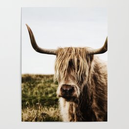 Highland Cow - color Poster