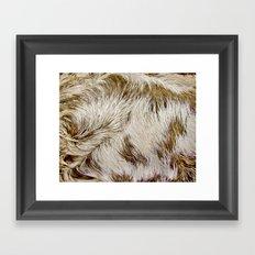 Boca Sloth coat  Framed Art Print