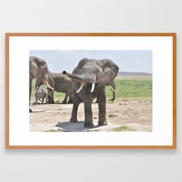 Playful Elephant Framed Art Print