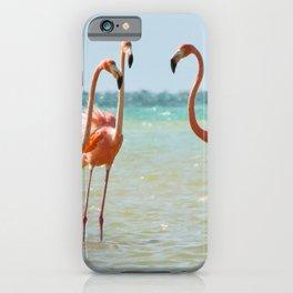 Flamingos Isla Holbox, Mexico iPhone Case