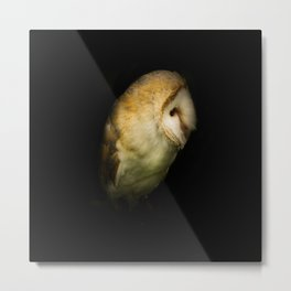 Barn Owl Portrait Metal Print