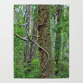 Tree Climber Poster