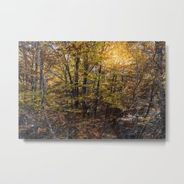 Beech forest in Autumn Metal Print