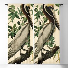 Brown Pelican (Pelecanus occidentalis) Scientific Illustration Blackout Curtain