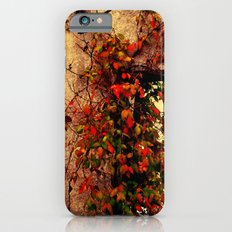 Old Abandoned Building And Flowers In Kentucky iPhone 6s Slim Case