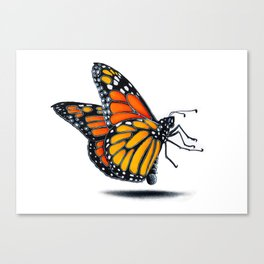 MONARCH BUTTERLY Canvas Print