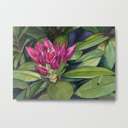 Rhododendron Bud Metal Print