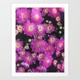 Pink Mums Garden Art Print