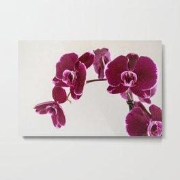 Plum Moth Orchids Metal Print