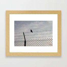 Single Black Bird on a Barbed Wire Fence Framed Art Print