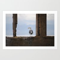 Alcatraz Gull Art Print