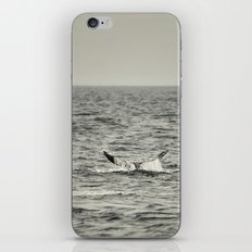 Whale of a Tale iPhone & iPod Skin