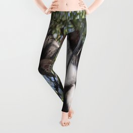 Bi-Color Tabby Cat In Tree 4 Leggings