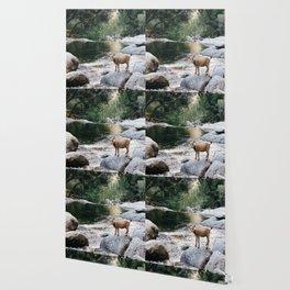 goat creek Wallpaper