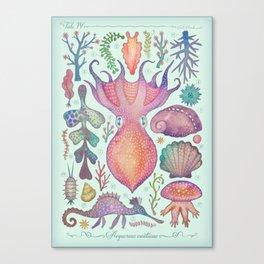 Marine Creatures IV Canvas Print