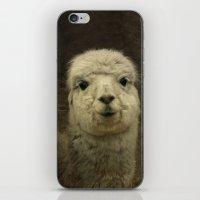 alpaca iPhone & iPod Skins featuring Alpaca  by Guna Andersone & Mario Raats - G&M Studi
