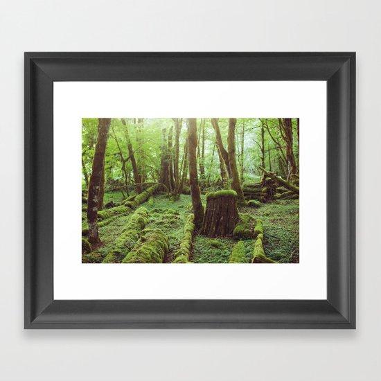 Mossy Forest Framed Art Print