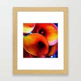 Orange Calla Lillies Framed Art Print