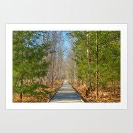 Jesup Boardwalk Trail Art Print