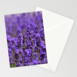 the smell of lavender -c- Stationery Cards