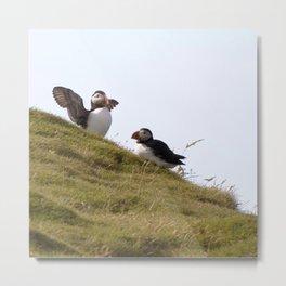 Watercolor Bird, Atlantic Puffins 28, Westman Islands, Iceland Metal Print