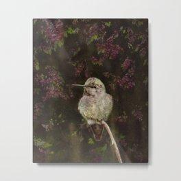 Anna's Hummingbird - Backyard Birds Metal Print