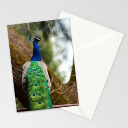 Farm peacock Stationery Cards