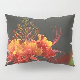 Desert Fall Colors IV Pillow Sham