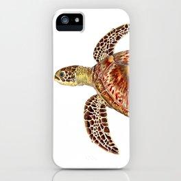 Green turtle Chelonia mydas iPhone Case