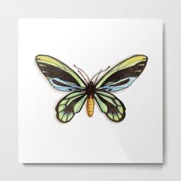 Butterflies: Queen Alexandra's Birdwing Metal Print