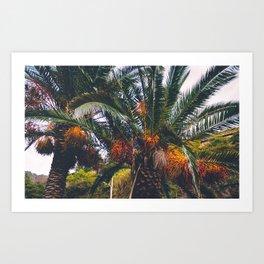 Excotic plants Art Print