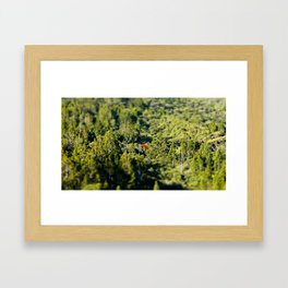 Lonely Pohutukawa Tree in Karekare Forest, New Zealand Framed Art Print