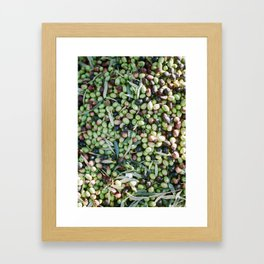 "Travel photography ""Mixed Olives"" 