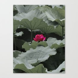 Nature's Pink Canvas Print