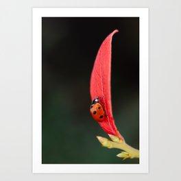 Ladybug On An Autumn Leaf Art Print
