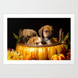 Pumpkin Basket Filled with Two Puggle Puppies and a Beaglier Puppy for Halloween Art Print