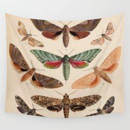 Vintage Natural History Moths Wall Tapestry