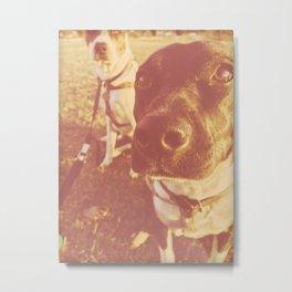 Blue Heeler Dogs At Sunset Metal Print