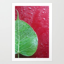 Leaf on red Art Print